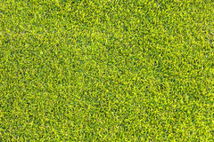 Green grass texture and backgrounds Royalty Free Stock Photos