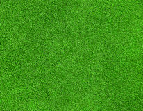 Green grass texture. Beautiful green grass texture on golf course Royalty Free Stock Images