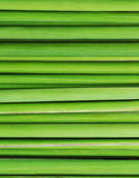 Green grass. Texture of close up Stock Image