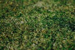 Green grass texture. Closeup view Royalty Free Stock Photography