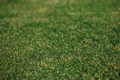 Green grass texture. Closeup view Royalty Free Stock Photos