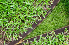 Green grass texture concepts zippers Change Stock Photography