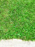 Green grass texture Crack with concert background.  Stock Photography