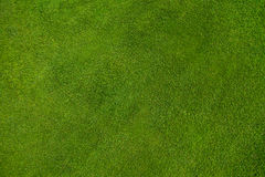 Green grass texture Stock Photos