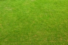 Green Grass Texture Royalty Free Stock Images