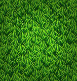 Green grass texture. Floral nature spring background Royalty Free Stock Image