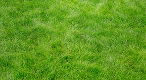 Green grass texture Stock Photography
