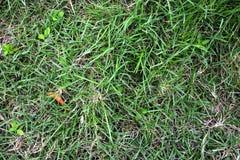 Green grass texture. In garden Royalty Free Stock Photos