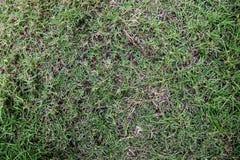 Green grass texture. In garden Stock Images
