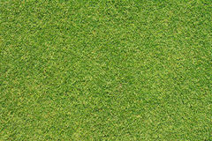 Green grass texture. From golf course Stock Photo
