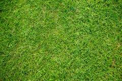 Green grass texture.Green grass. Natural background texture. fresh spring green grass Stock Image