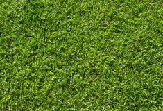 Green Grass Texture. Green Lawn Soccer Field Background Royalty Free Stock Image