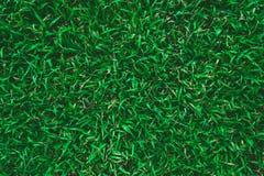 Green Grass Texture. High resolution image of Green Grass Texture Stock Image