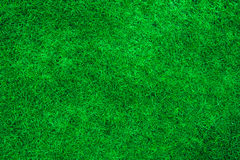 Green Grass Texture. High resolution image of Green Grass Texture Royalty Free Stock Photography