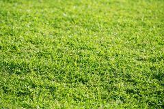 Green grass texture macro selective focus Stock Photography