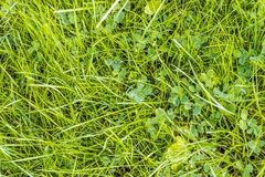 Green grass texture with natural patterns view from above can be Royalty Free Stock Photos