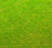 Green Grass Texture Stock Images