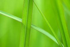 Green grass in texture Royalty Free Stock Images