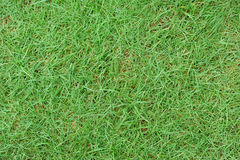 Green Grass texture outdoor in high resolution Royalty Free Stock Photos