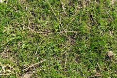 Green grass texture pattern background. Top view Royalty Free Stock Photography