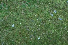 Green grass texture. with small rocks royalty free stock photography