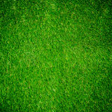 Green grass texture from Royalty Free Stock Image