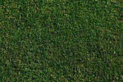 Green grass texture. Top view Royalty Free Stock Photo