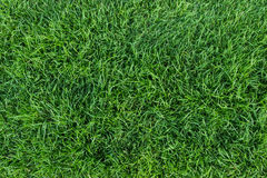 Green grass texture. On top view Royalty Free Stock Photo