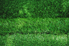 Green grass texture, turf stairs, selective focus shallow depth of field Stock Photo