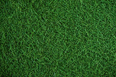 Green grass texture, turf texture Stock Photo