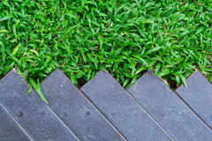 Green grass texture with wood floor. Green grass texture , wood floor Stock Photography