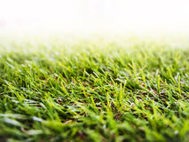 Green grass textured Abstract natural background Stock Photo