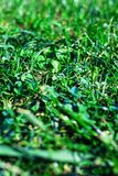 Green grass textured background. Field of summer grass, horizont. Al image Stock Image