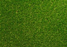 Green grass textured background for golf sport and soccer sport. Green grass texture background for golf sport and soccer sport royalty free stock photos