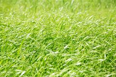 Green grass, for textures or backgrounds Stock Image