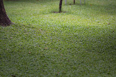 Green grass texure Royalty Free Stock Photo