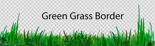 Free Green Grass That Is Longitudinal To Use As A Design Element Isolated From A Transparent Background. Vector Illustrations Royalty Free Stock Photos - 145623968