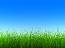 Green grass thin. Thin green grass with blue sky Stock Photography
