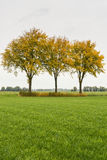 Green grass and three yellowed trees Royalty Free Stock Photography