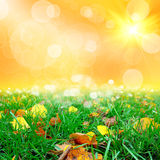 Green grass with thw leafs Stock Images