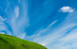 Green grass and tiny tree on the hill and the blue sky with white clouds Stock Image