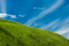 Green grass and tiny tree on the hill and the blue sky with white clouds Royalty Free Stock Photography