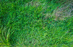Green grass.top veiw Stock Photos
