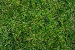 Green grass top view, texture. Royalty Free Stock Photos