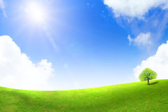 Green grass and tree. With bright blue sky Stock Photos
