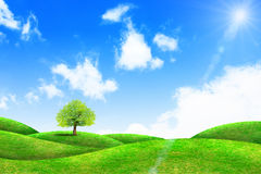 Green grass and tree. With bright blue sky Royalty Free Stock Images