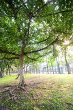 Green grass and tree Royalty Free Stock Photos