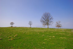 Green grass and tree blue sky Stock Image