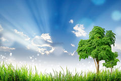 Green Grass Tree and bokeh light sun and cloud sky Royalty Free Stock Photography