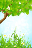 Green Grass and Tree Branch Stock Photography